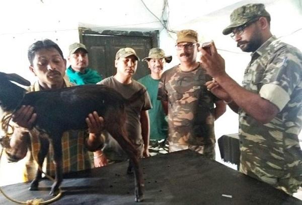 नक्सल प्रभावित बीजापुर में CRPF ने खोला पहला पशु-चिकित्सालय