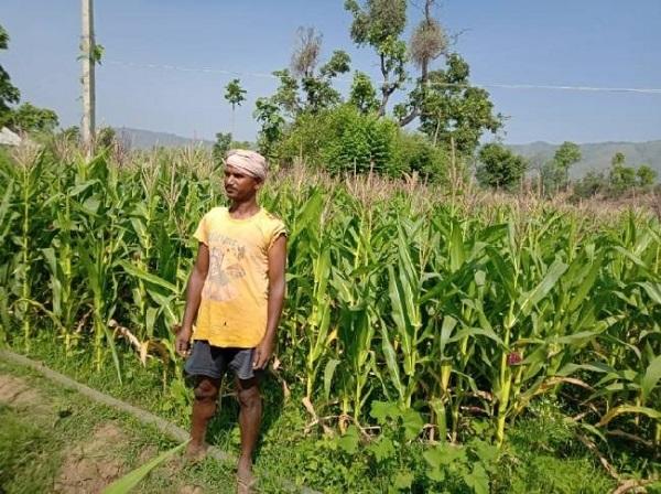नक्सल प्रभावित इलाके में बंजर जमीन पर लहलहा रहे हरे-भरे खेत