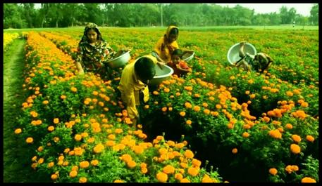 झारखंड: जहां गरजती थी नक्सलियों की बंदूक, अब वहां खिल उठे हैं गेंदा के फूल, पढ़िए महिला किसानों के बेमिसाल जज्बे की कहानी